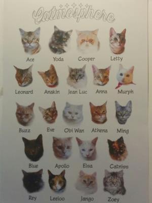 チェンマイの猫カフェ事情!猫好きだけどタイで猫と戯れるのは怖いという方にオススメ